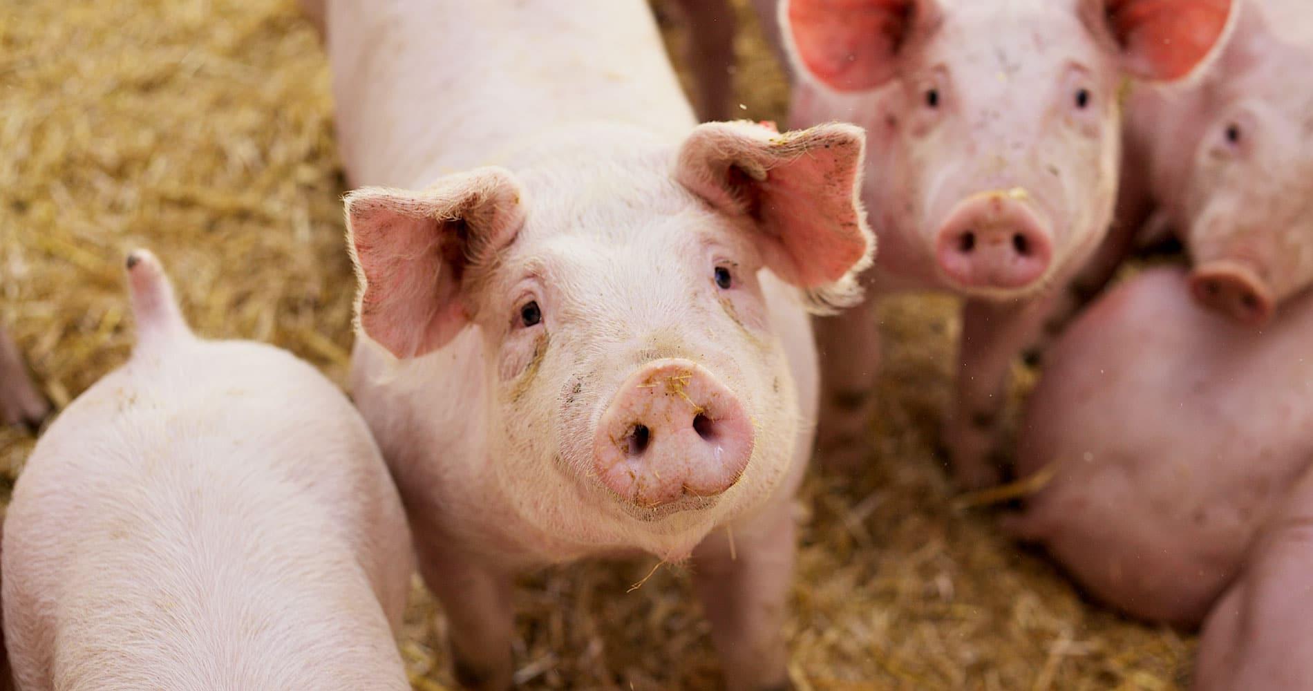 Referenzstory – Branche: Lebensmittelbranche: Fleischwaren